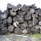 横浜のオーダー家具ユウキの木材とのつながり
