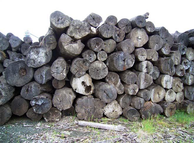 木材とのつながり 天然木
