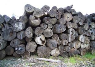 ユウキのこだわり 木材とのつながり 天然木
